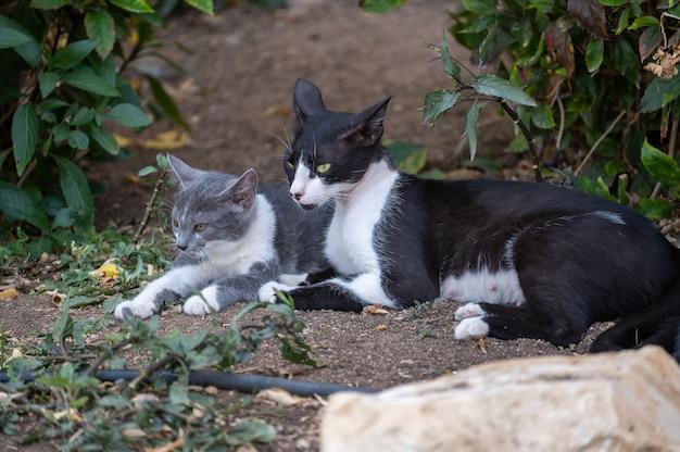 Бездомная мама-кошка с котенком. бездомные животные. мама кошка с котенком. бездомная мать с ребенком на улице. испуганный маленький бело-серый котенок прижимается к кошке