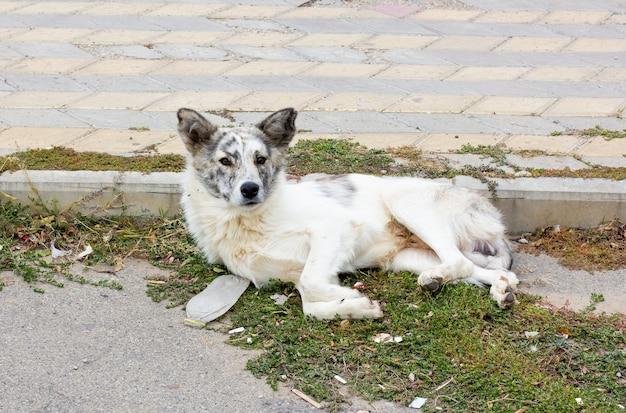 ホームレスの貧しい犬が地面に横たわっていた