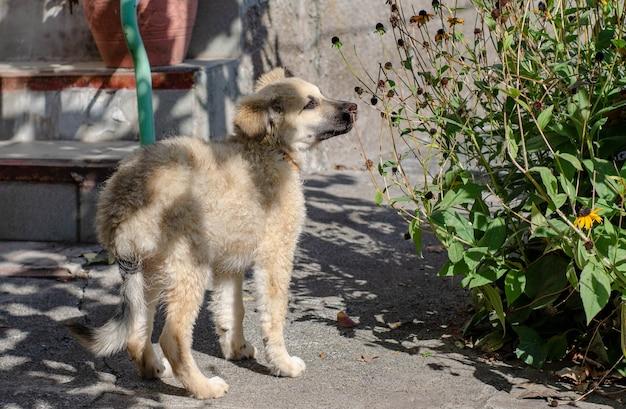 Бездомного щенка из собачьего приюта забрали домой