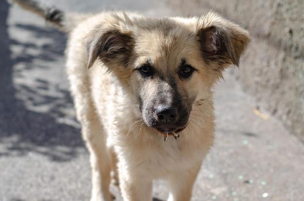 犬の避難所からホームレスの子犬が家に連れて行かれた