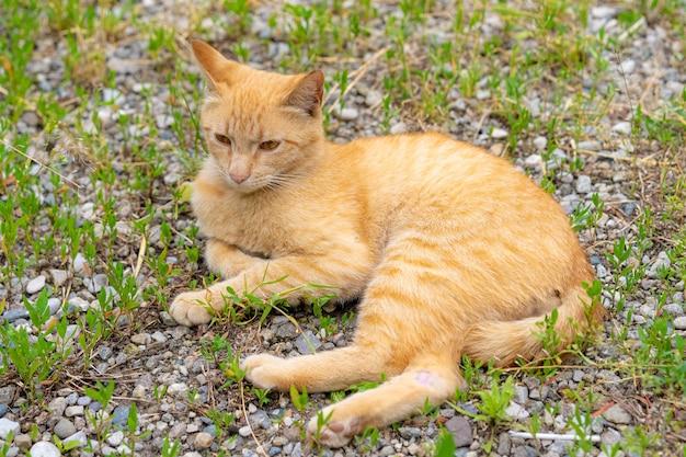 ホームレスの赤い猫が地面に横たわっています
