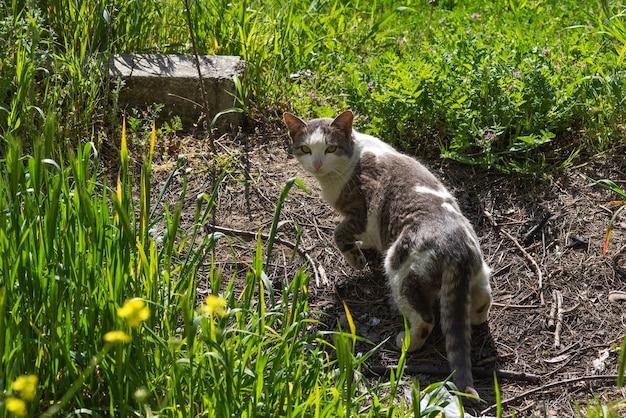 Homeless stray cat in the garden