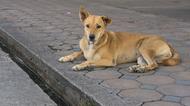 Homeless stray dog is sitting in the street.