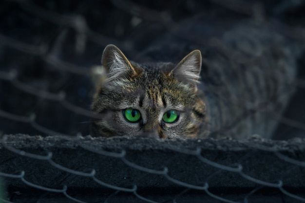 Homeless tabby cat sits behind a fence and looks with bright green eyes