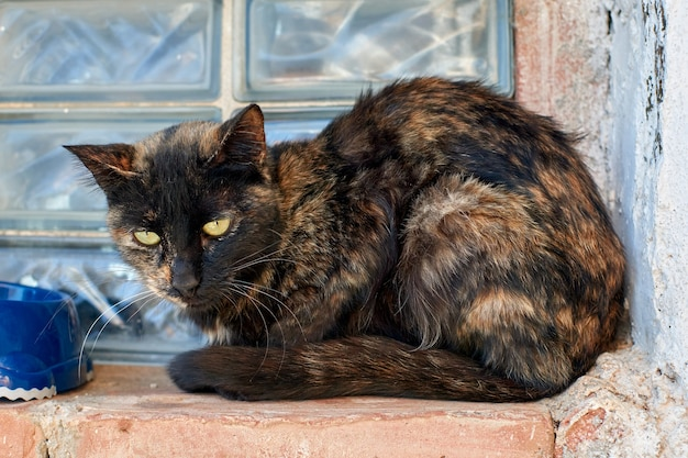 A homeless tortoiseshell cat near a window looking sad