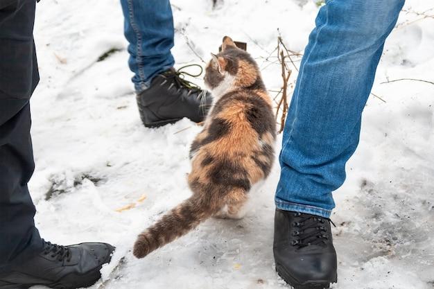 Бездомный трехцветный кот стоит на снегу в поисках укрытия от холода среди человеческих ног