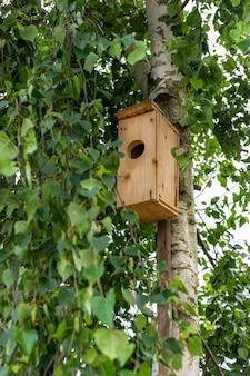 Homemade birdhouse for birds on a birch tree.