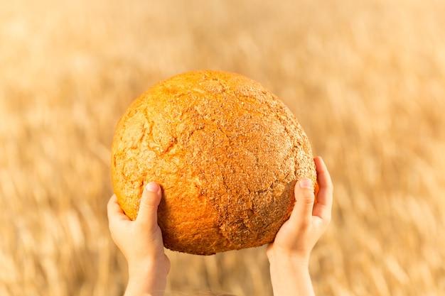 밀가 필드 배경 손에 수제 빵