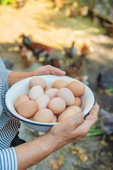 Homemade eggs in grandmother's hands