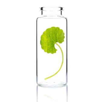흰색 절연 유리 병에 centella asiatica로 만든 피부 관리.