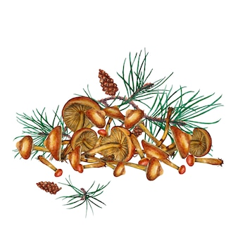 Honey agaric mushrooms with pine branches. watercolor illustration.