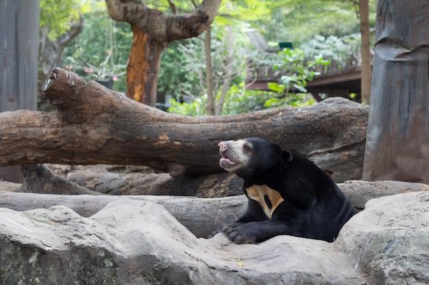Медовый медведь в зоопарке