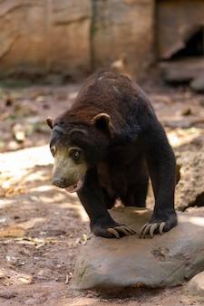Медовый медведь в лесной атмосфере