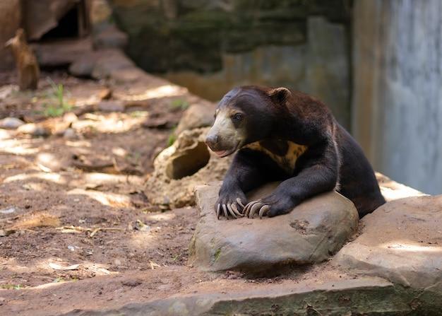 Медовый медведь сидит в атмосфере леса