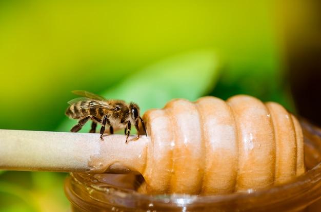 Honey bee on nature. honey with flying honey bee