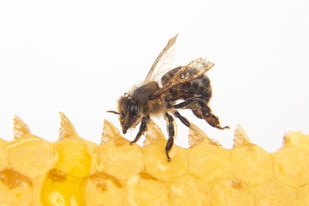 신선한 벌집의 배경에 꿀벌입니다. 곤충과 유기농 비타민 식품