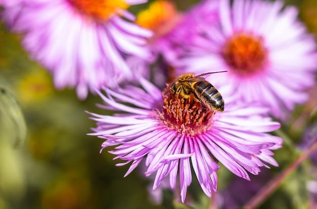 ピンクの花にミツバチをクローズアップ