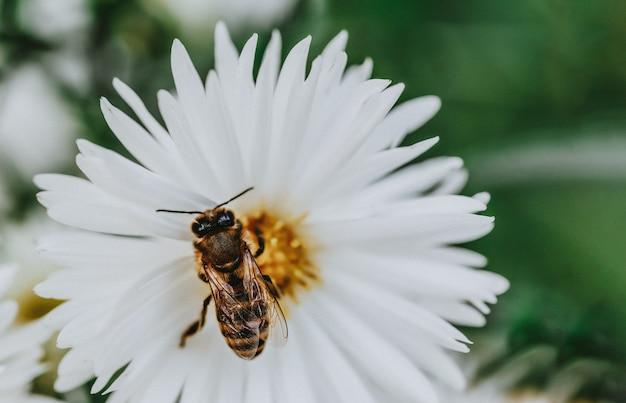 흰 꽃 꽃잎에 꿀 꿀벌