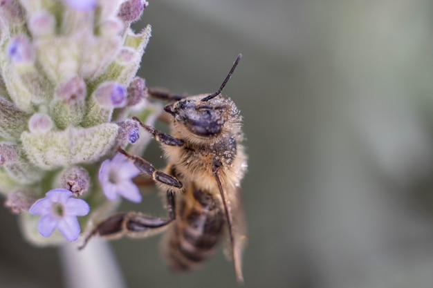 ミツバチは春の牧草地で黄色の花を受粉します。季節ごとの自然シーン。美容写真フィルター。