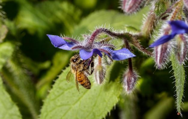 花粉を探して花の上に座っているミツバチ