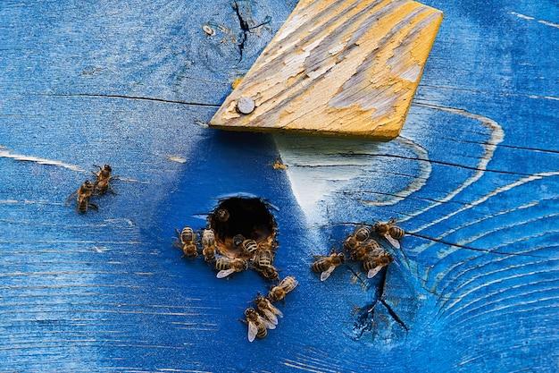 Медоносные пчелы у входа в расписной деревянный улей крупным планом