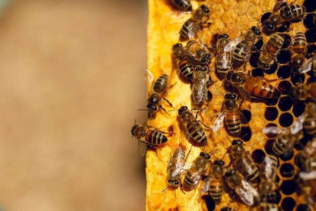 벌집에 벌집에 꿀벌