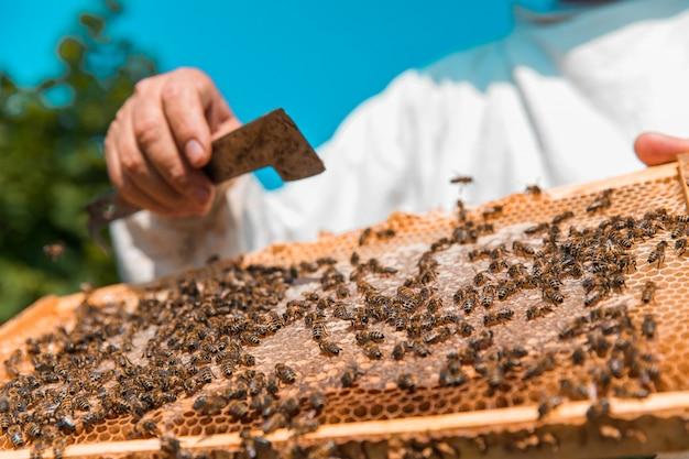 木製ミツバチの巣箱にミツバチ。高品質の写真