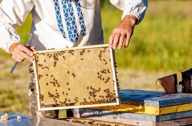 Клетка меда с крупным планом пчел в солнечный день. пчеловодство. пасека