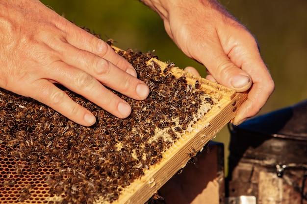 Медовая ячейка с крупным планом пчел в солнечный день.