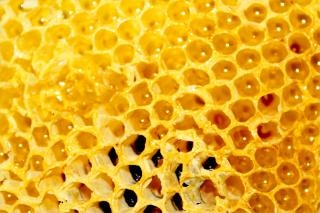 Honey comb, honeycomb