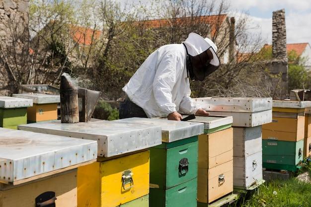 Honey farm landscape