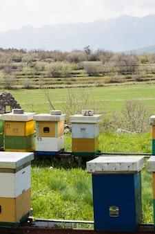 Paesaggio agricolo miele
