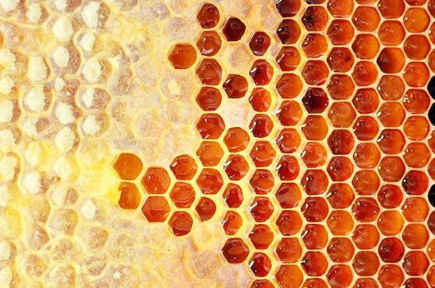 Мед в рамке