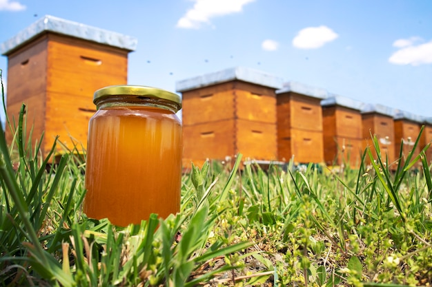 Honey jar and beehives on meadow in springtime