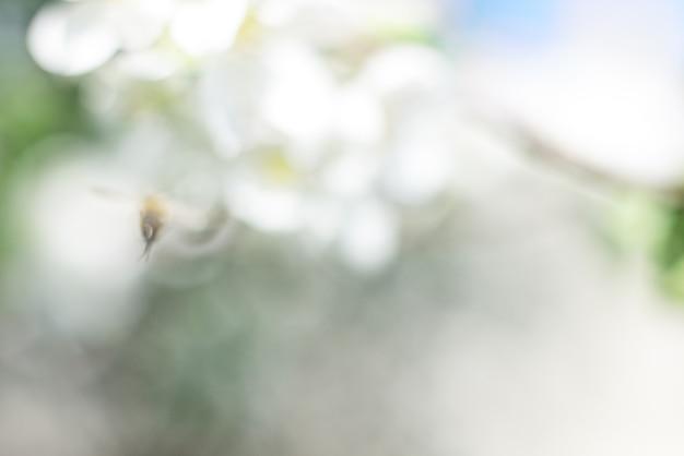 꿀벌과 흰색 사과 꽃