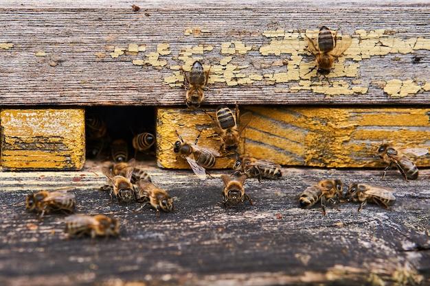 Медоносные пчелы роятся у входа в расписной деревянный улей крупным планом