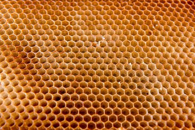 꿀벌이 만든 벌집 배경 질감.