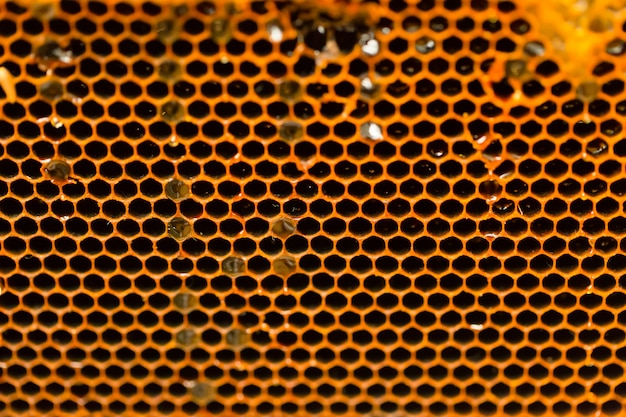 Honeycomb bee home closeup texture background