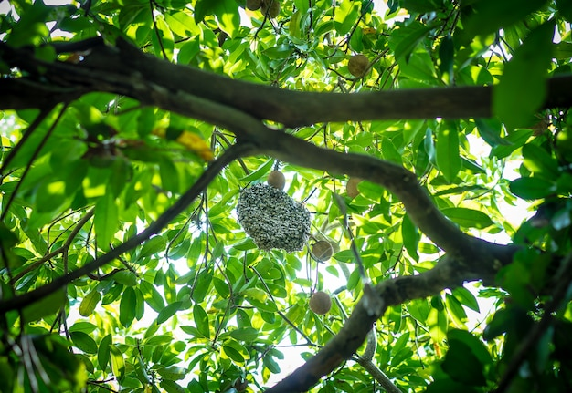 Honeycomb and bee on sapling tree with green leaves
