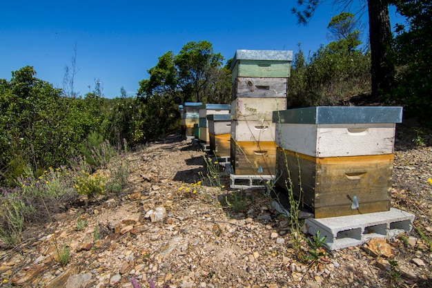 Honeycomb crates on nature surrounded by vegetation.