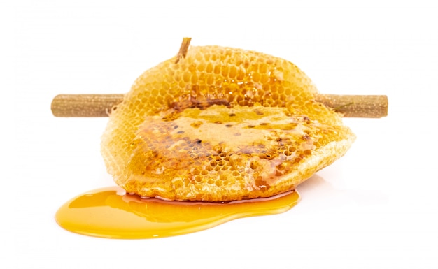 Honeycomb on dry branch isolated