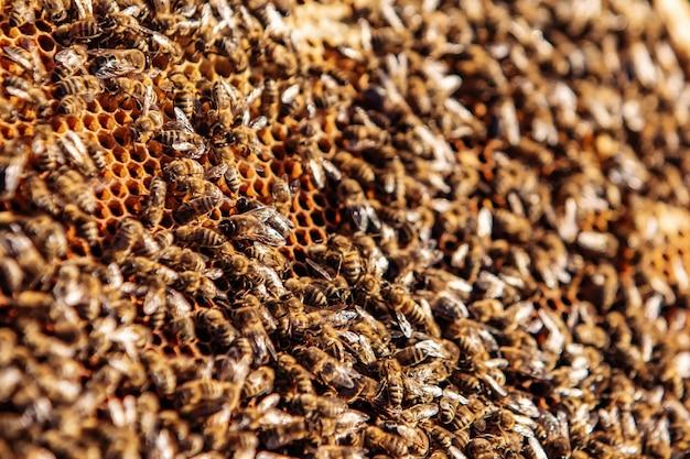 Соты, полные пчел. каркас с пасеки. понятие о пчеловодстве. сбор меда