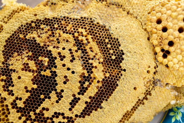 The honeycomb of the villager natural sweet food.