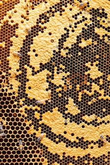蜂のテクスチャの背景を持つハニカム