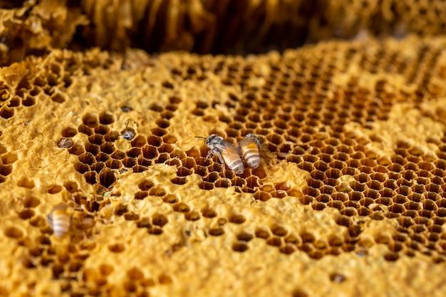 Соты с фоном текстуры пчелы