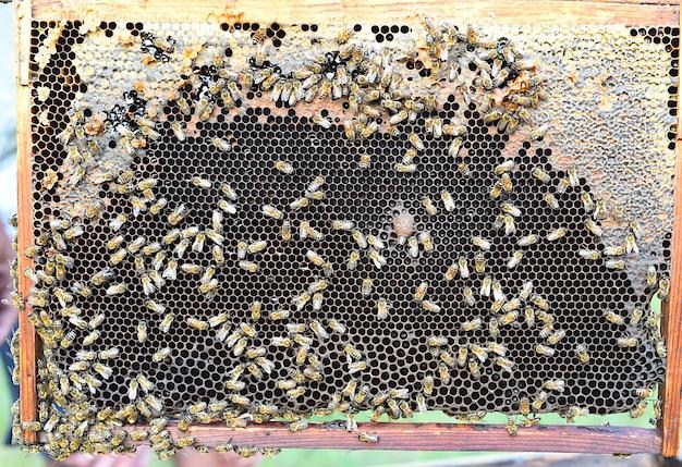 사람이 없는 벌이 있는 벌집
