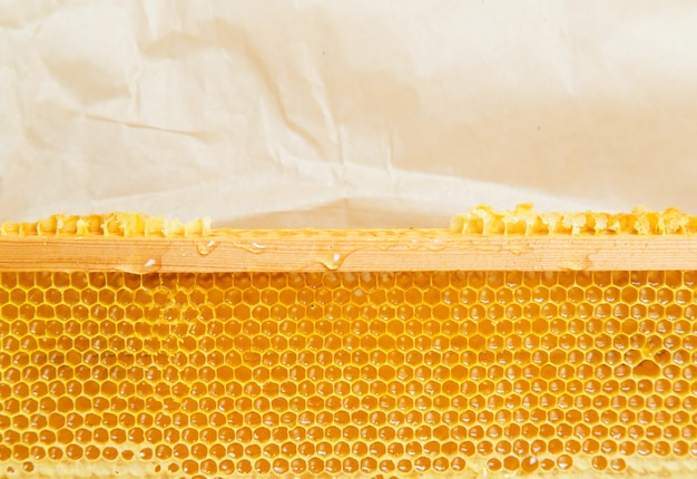 Honeycombs on the frame.