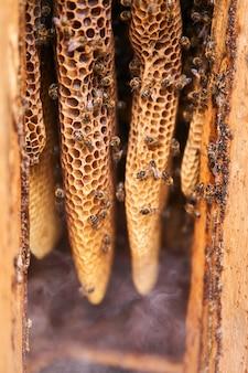 養蜂家の喫煙者からの煙の中の伝統的な丸太の巣の中の自然な形のハニカム