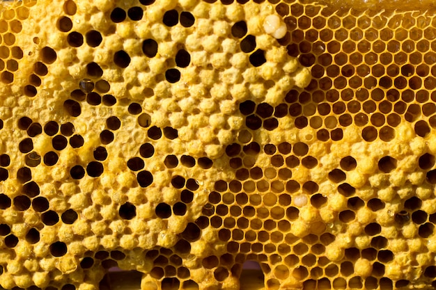 Honeycombs with honey, brood and perga background