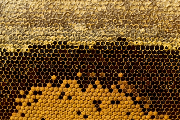 Honeycombs with honey, brood and perga